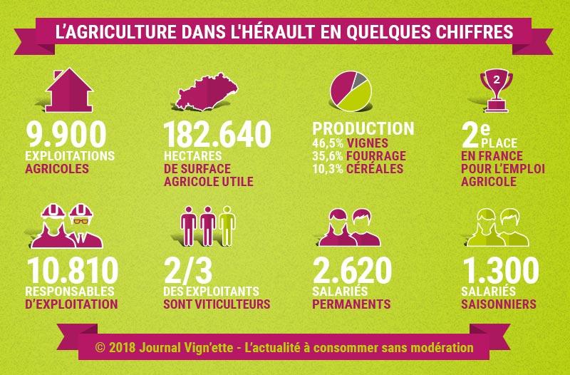 Infographie : l'agriculture dans l'Hérault en chiffres