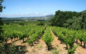 Les vignes et le terroir du Pays Cœur d'Hérault