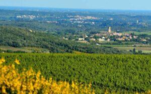 Paysage de l'AOC Pézenas