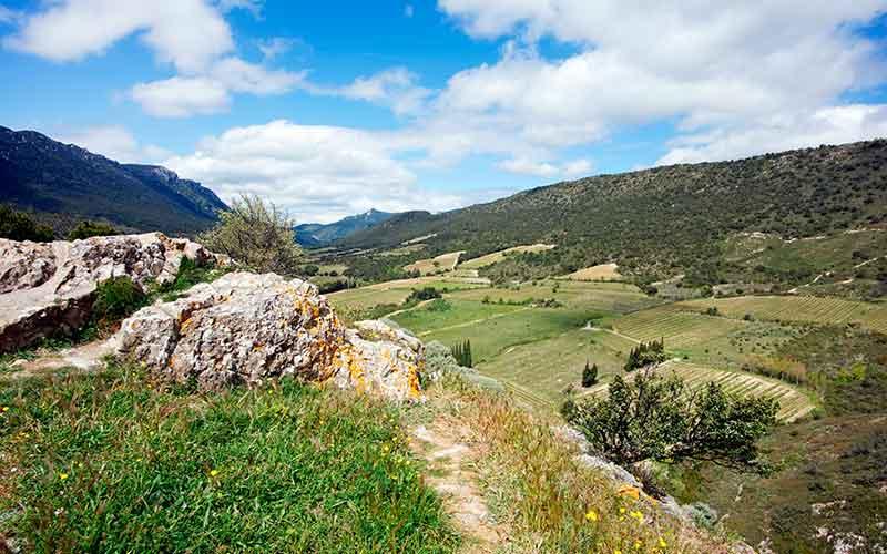 IGP Vallée du Paradis, vin du Languedoc