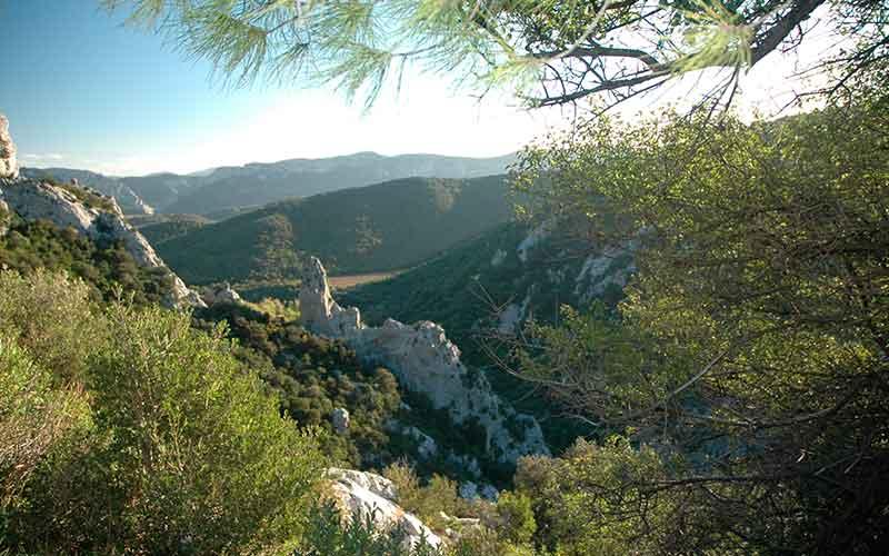IGP Vallée du Torgan, vin du Languedoc