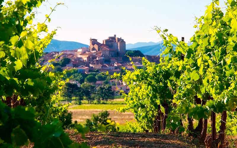 Vin IGP Côtes de Thongue